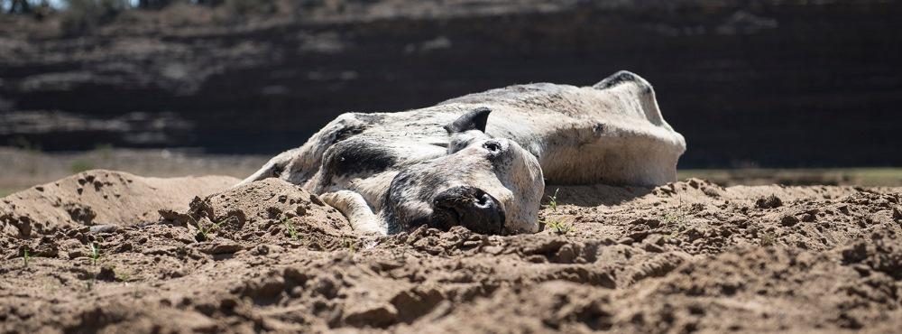 PSD alerta para suspensão da recolha de cadáveres animais, ministro nega riscos