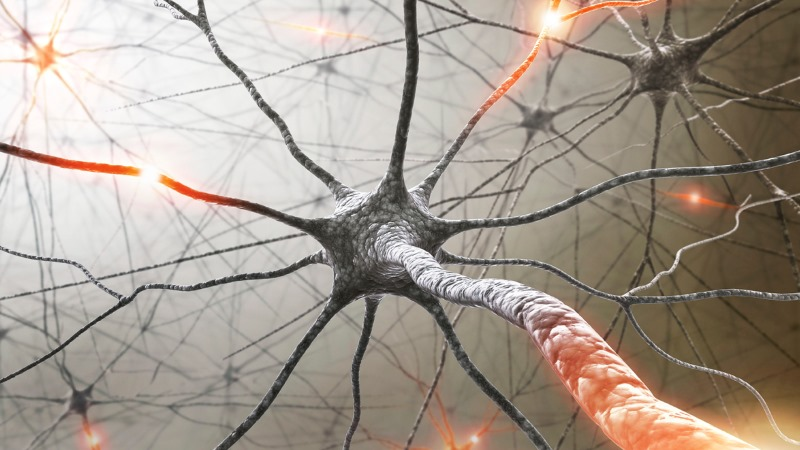 Repensar a Imunologia na Esclerose Múltipla
