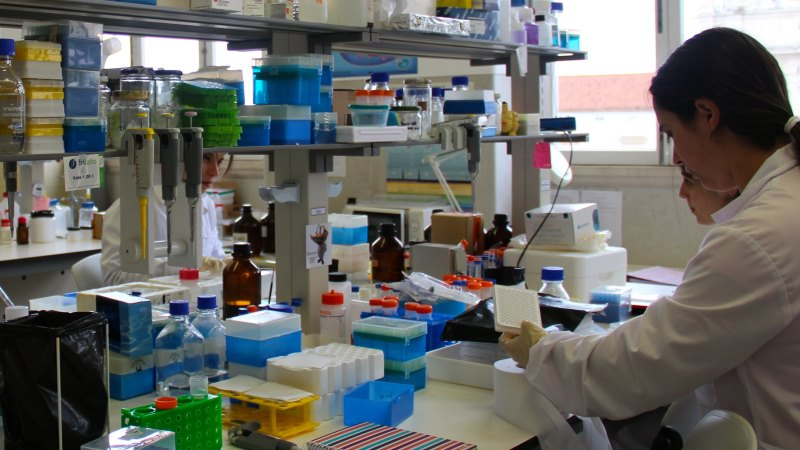 Portugueses vão liderar projectos internacionais de investigação nas áreas do fígado, cancro e nano-segurança