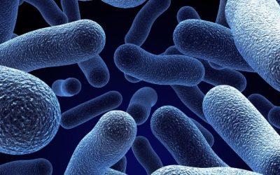 Legionella: Governo quer auditorias trianuais e sanções acima dos 40 mil euros