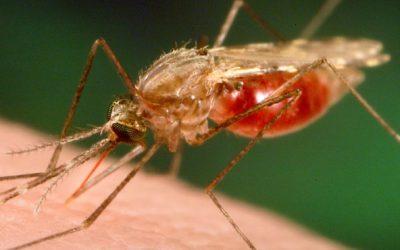 Malária continua um grande problema em todos os PALOP