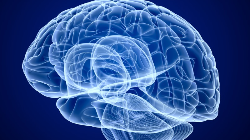 Estudo relaciona aumento do cérebro das crianças com o autismo