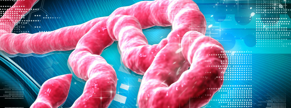 Base de dados sobre ébola oferecida por cientistas portugueses