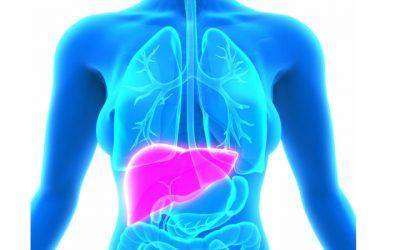 Grupo Hepatológico Transmontano cria rede para tratar doenças do fígado