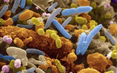 Universidade de Leicester desenvolve vírus no Algarve para erradicar infeção no intestino