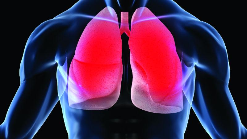 Pulmões têm um papel na produção de sangue