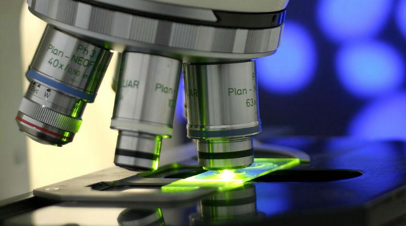 Cientistas descobrem mecanismo nas células que gera músculo saudável