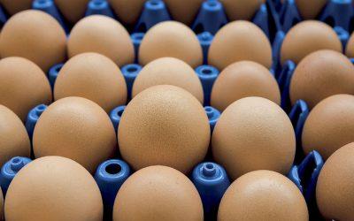 União Europeia alerta países sobre eventual entrada de ovos contaminados