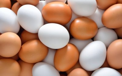 Holanda lança alerta alimentar por causa de ovos contaminados