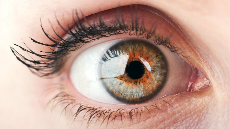 Portugueses participam em projeto que desenvolve modelo de olho para trabalho científico