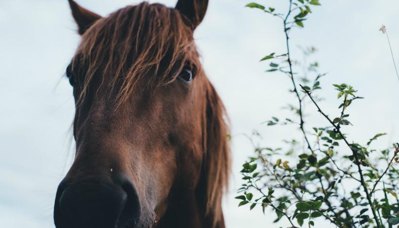 Arouca inicia programa de terapia com cavalos para alunos com necessidades especiais