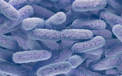 Chega ao SNS fármaco para tratar infeções por organismos Gram-negativos