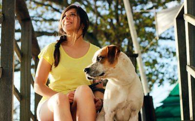 Nova terapia pode reverter sintomas da diabetes tipo 1 nos cães e humanos