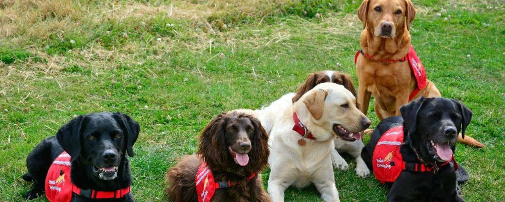 Os cães que cheiram doenças e que podem salvar vidas