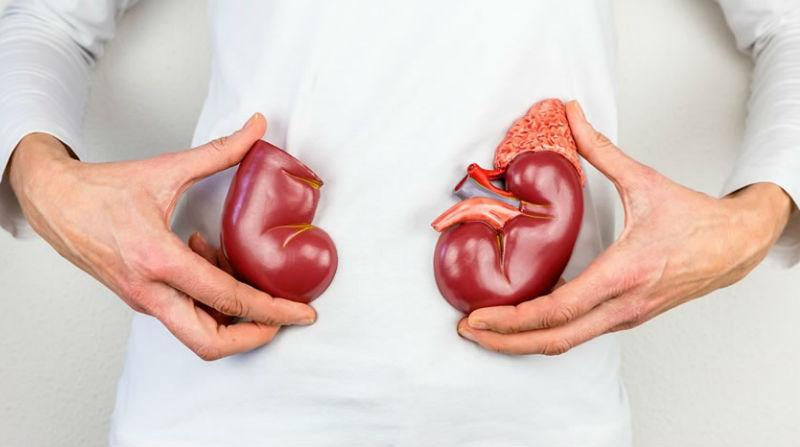 Quase 2 mil doentes aguardavam transplante renal no final de 2018