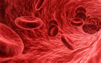 Maioria dos pais de crianças hemofílicas sente que doença condiciona vida do filho