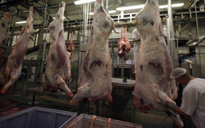 Governo garante que carne de vaca polaca imprópria para consumo já foi destruída