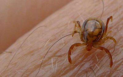 Caso de febre hemorrágica da estirpe Crimeia do Congo confirmado em Angola