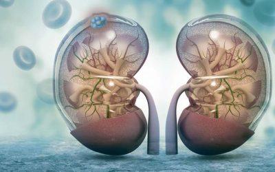 Novo tratamento para carcinoma de células renais avançado
