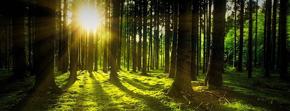 """Dr. Viriato Horta: """"O Sol deixou de ser um """"Sol útil"""" para produzir a vitamina D"""""""