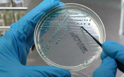 Cientistas portugueses desenvolvem terapia fágica para atacar bactérias
