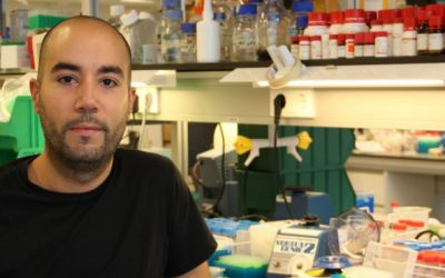 Cancro renal: Identificado biomarcador que pode melhorar prognóstico