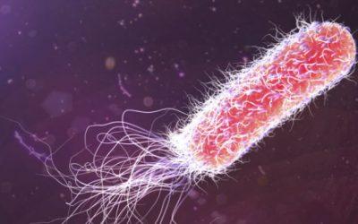 Bactéria 'Pseudomonas aeruginosa' ganha cada vez mais resistência