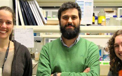 Descoberto novo mecanismo celular que evita anomalias ligadas ao cancro