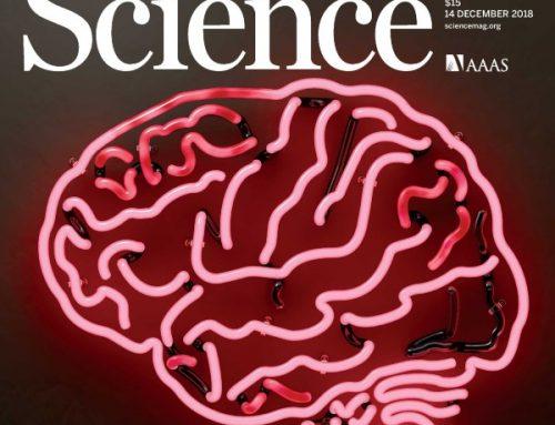 Dois cientistas portugueses no Conselho de Editores de Revisão da revista Science